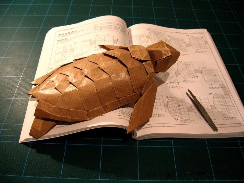 Click image for larger version  Name:Loggerhead Sea Turtle - Kamiya.jpg Views:74 Size:72.2 KB ID:57077