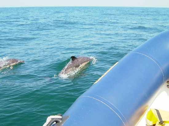 Click image for larger version  Name:dolphin2.jpg Views:463 Size:63.0 KB ID:5822
