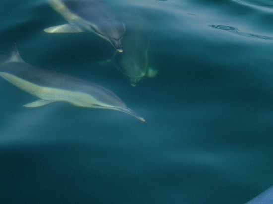 Click image for larger version  Name:dolphin3.jpg Views:447 Size:27.7 KB ID:5823