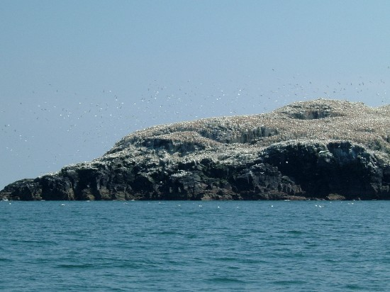 Click image for larger version  Name:gannets.jpg Views:448 Size:59.9 KB ID:5824