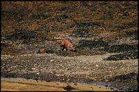 Click image for larger version  Name:otter 1-500.jpg Views:127 Size:37.4 KB ID:58293