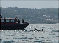 Click image for larger version  Name:Diver1.jpg Views:269 Size:208.1 KB ID:58547