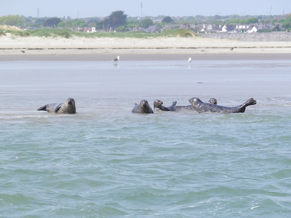 Click image for larger version  Name:Dublin Bay 7.jpg Views:122 Size:76.6 KB ID:59058