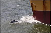 Click image for larger version  Name:tanker.jpg Views:125 Size:107.7 KB ID:59082