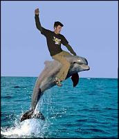 Click image for larger version  Name:normal_dolphin-lorin.jpg Views:120 Size:20.8 KB ID:64359