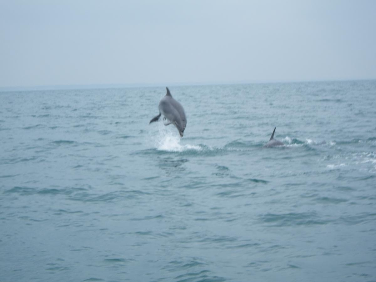 Click image for larger version  Name:Dolphin Jumping.jpg Views:112 Size:56.1 KB ID:66726
