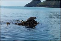 Click image for larger version  Name:Seals 3.jpg Views:134 Size:109.4 KB ID:66894