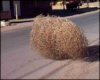 Click image for larger version  Name:tumbleweed.jpg Views:98 Size:207.2 KB ID:69357