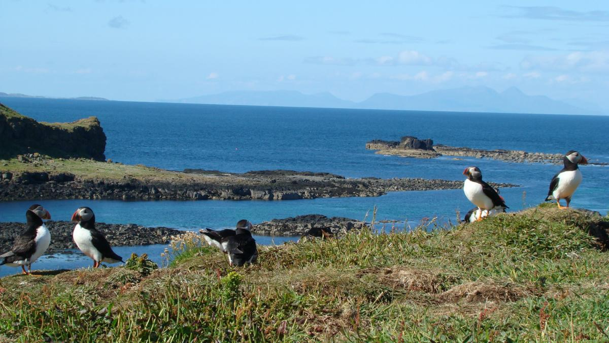 Click image for larger version  Name:puffins08 008.jpg Views:134 Size:145.1 KB ID:74134