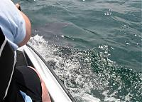 Click image for larger version  Name:dolphin5.jpg Views:182 Size:51.4 KB ID:8062