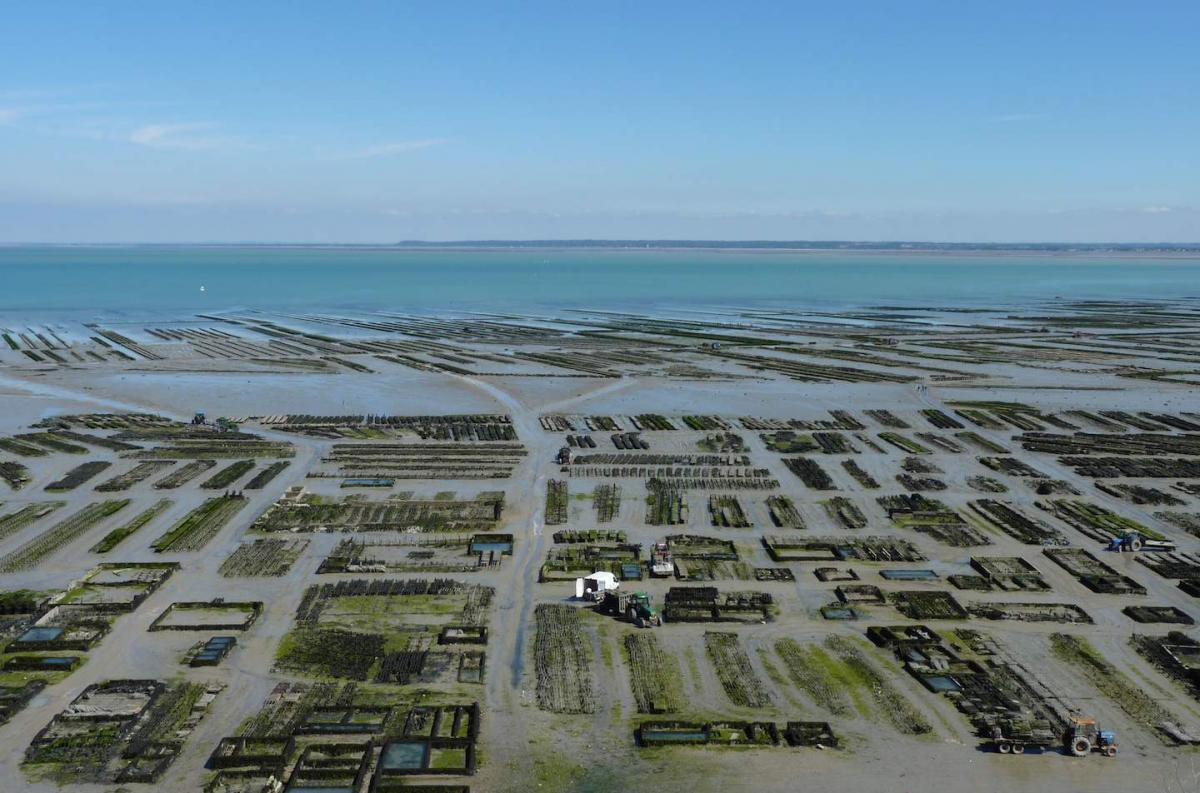 Click image for larger version  Name:Cancale Oyster Beds 2.jpg Views:115 Size:131.8 KB ID:84939