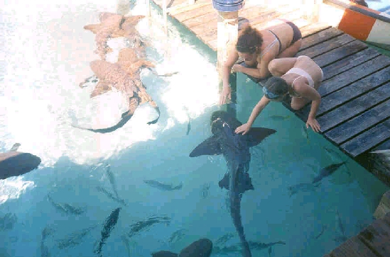 Click image for larger version  Name:shark1.jpg Views:230 Size:147.9 KB ID:8759