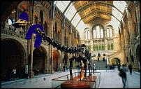 Click image for larger version  Name:Nat_hist_1250628c.jpg Views:103 Size:67.9 KB ID:88594
