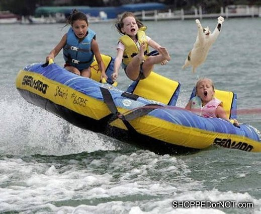 Click image for larger version  Name:cat-flying-out-of-water-tube-shopped-or-not.jpg Views:79 Size:56.1 KB ID:92942