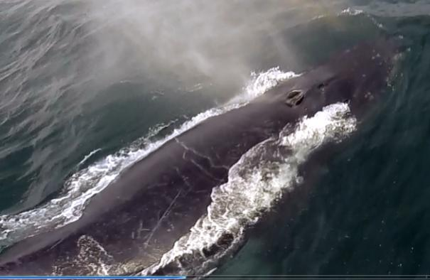 Click image for larger version  Name:whalewatch3.jpg Views:48 Size:29.2 KB ID:97599