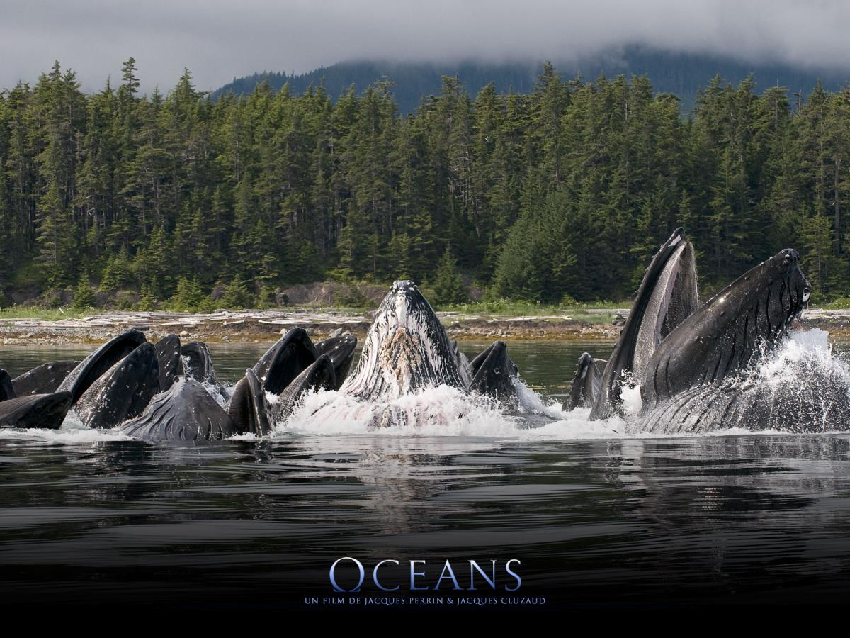 Click image for larger version  Name:oceans whales.jpg Views:279 Size:193.5 KB ID:99019