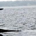 2004 Crompton Marine Sea Phantom