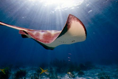 Stingray Cayman Islands