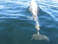 Donegal Dolphins