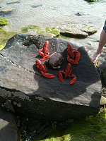 Lunch on Kildonan beach. Doesn't get any fresher