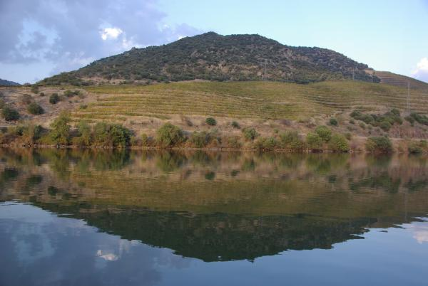 The Douro vineyards