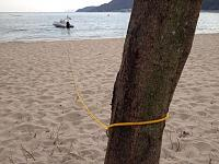 My beach line around the tree... can you see the black  ants on the yellow line??? the tree had a ants nest in!!