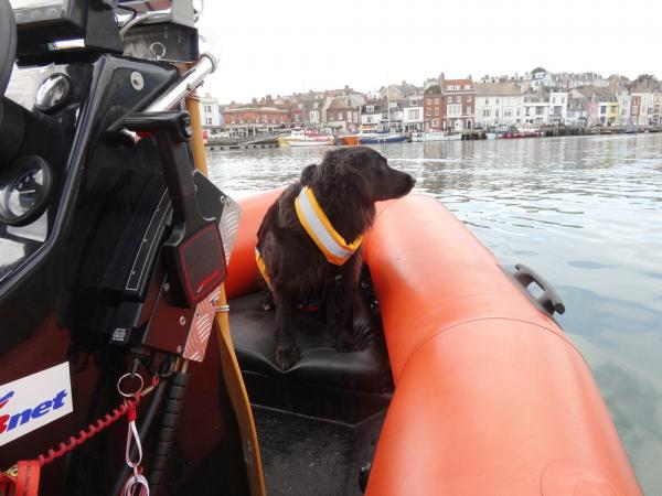 Grace the dog taking in the sights of Weymouth.