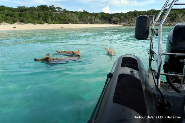Pig Beach Excursion, Bahamas