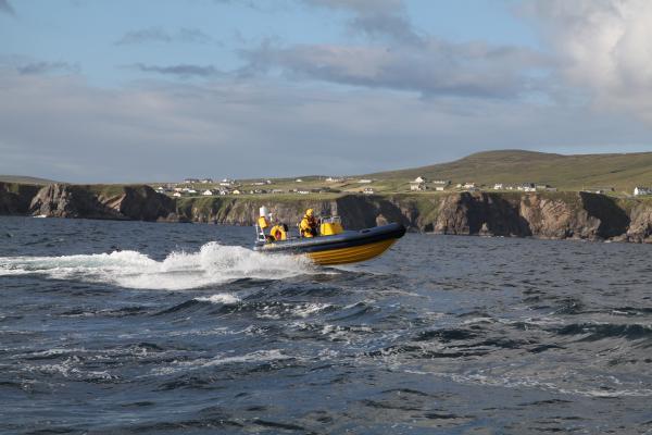 Merlin off the Antrim Coast (2)