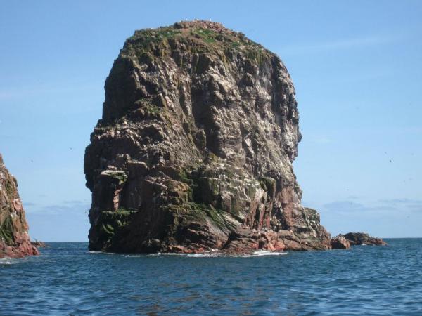 Sea Stack (near Bullers of Buchan).