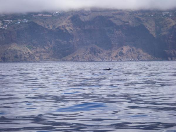 A Right Whale off Madeira !