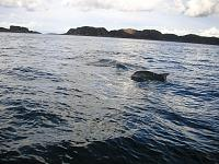 Oct 12 Grey Dogs Dolphins